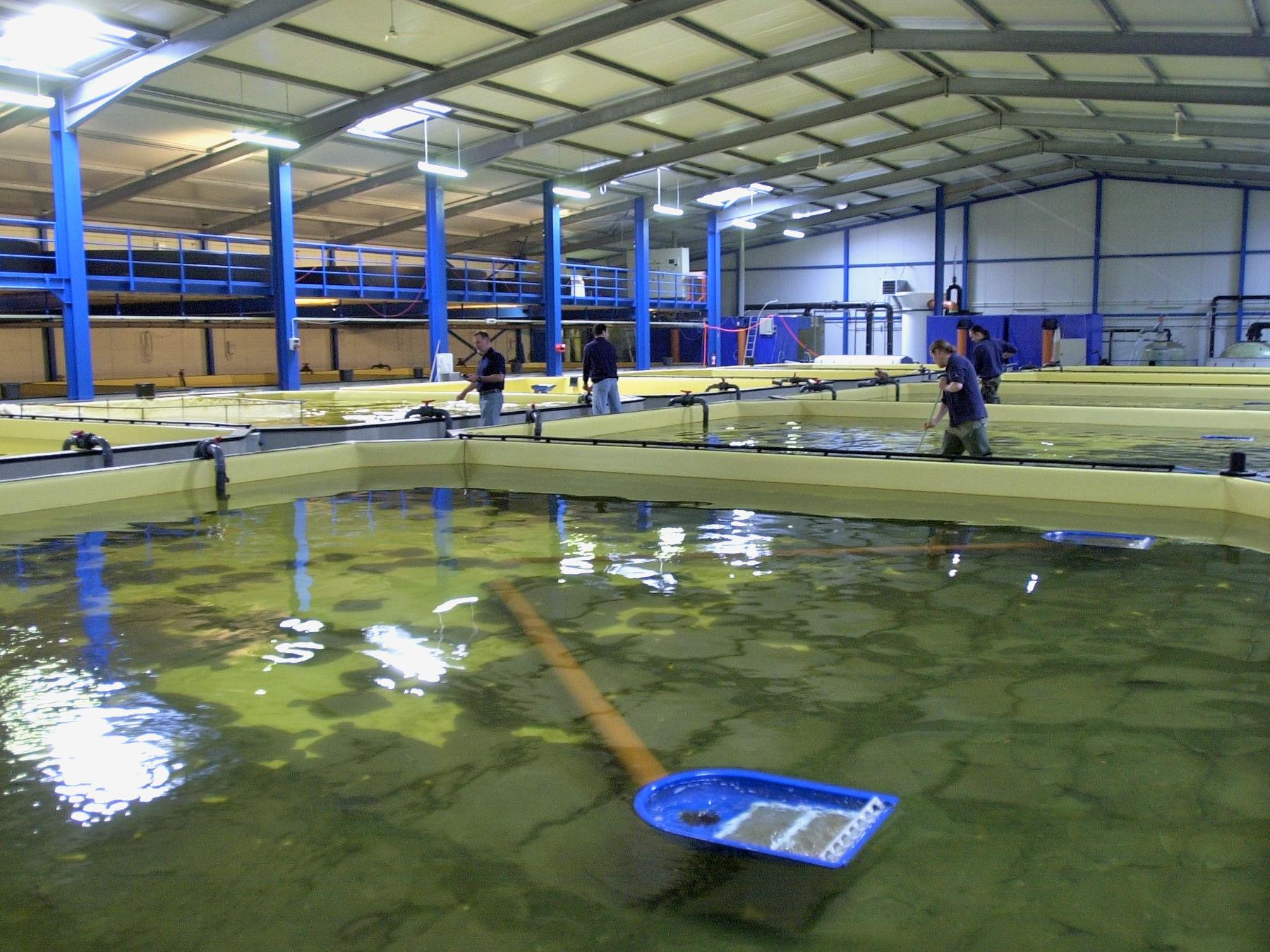 Ecomares Flatfish Farm, Buesum, Germany
